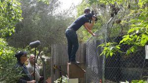 """ניסיון (נואש) לצלם את הלוטרה הזכר בגן החיות התנ""""כי בלי גדר בפריים..."""